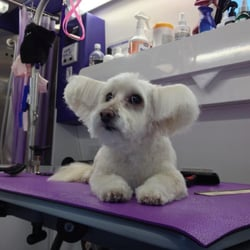 Lavender paws pet spa 28 photos 17 reviews pet groomers 1132 photo of lavender paws pet spa novato ca united states gus solutioingenieria Choice Image