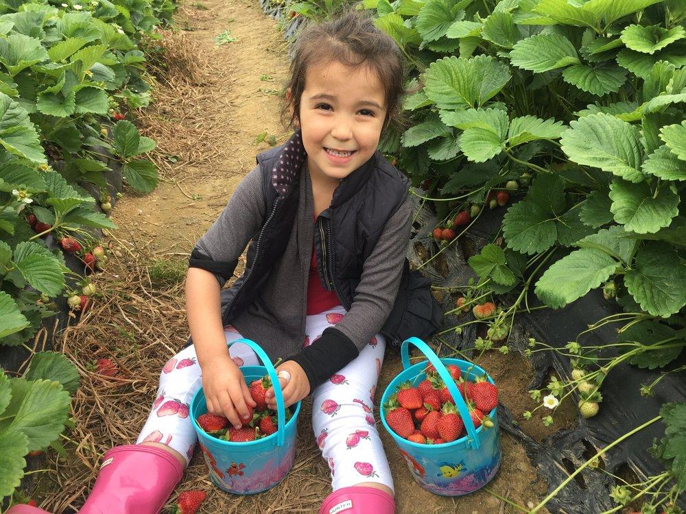 Photo of Wegmeyer Farms: Hamilton, VA