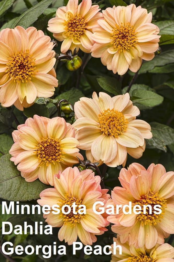 Minnesota Gardens: 200 Pioneer Trl, Chaska, MN