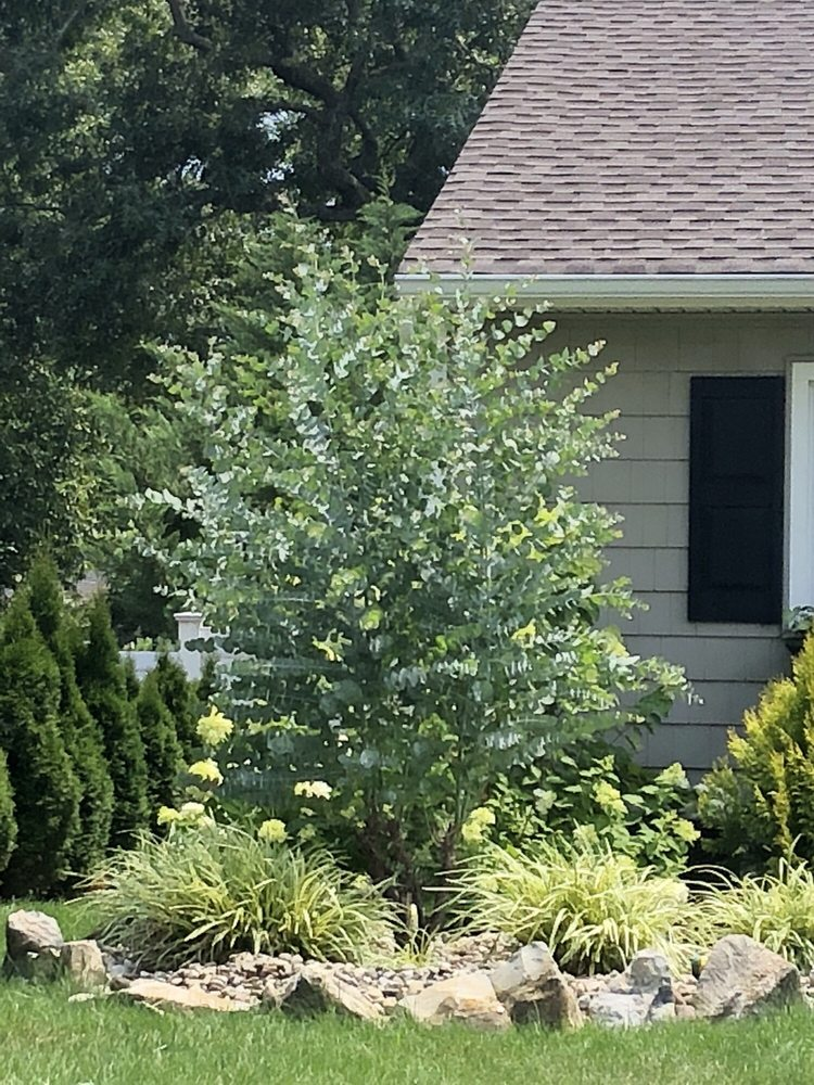Holly Brook Farms & Garden Center: 2023 Rt 35 N, Wall, NJ