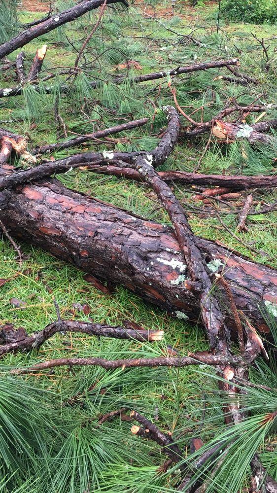 E & D Tree Service: Camilla, GA