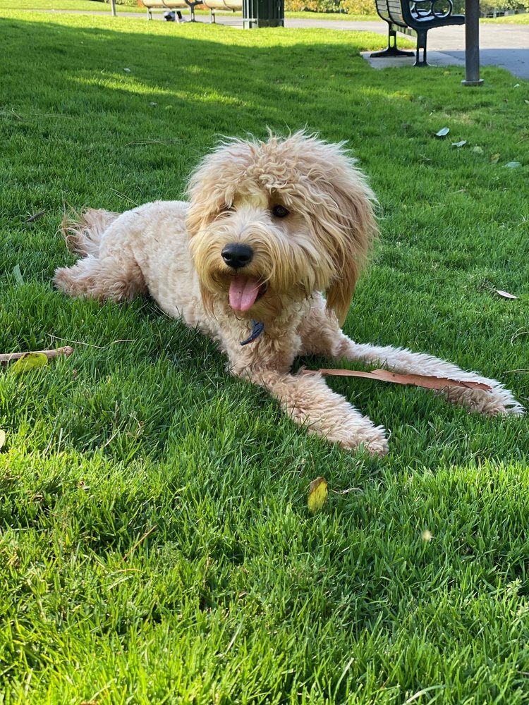 Doggie Styles: 401 Miller Ave, Mill Valley, CA