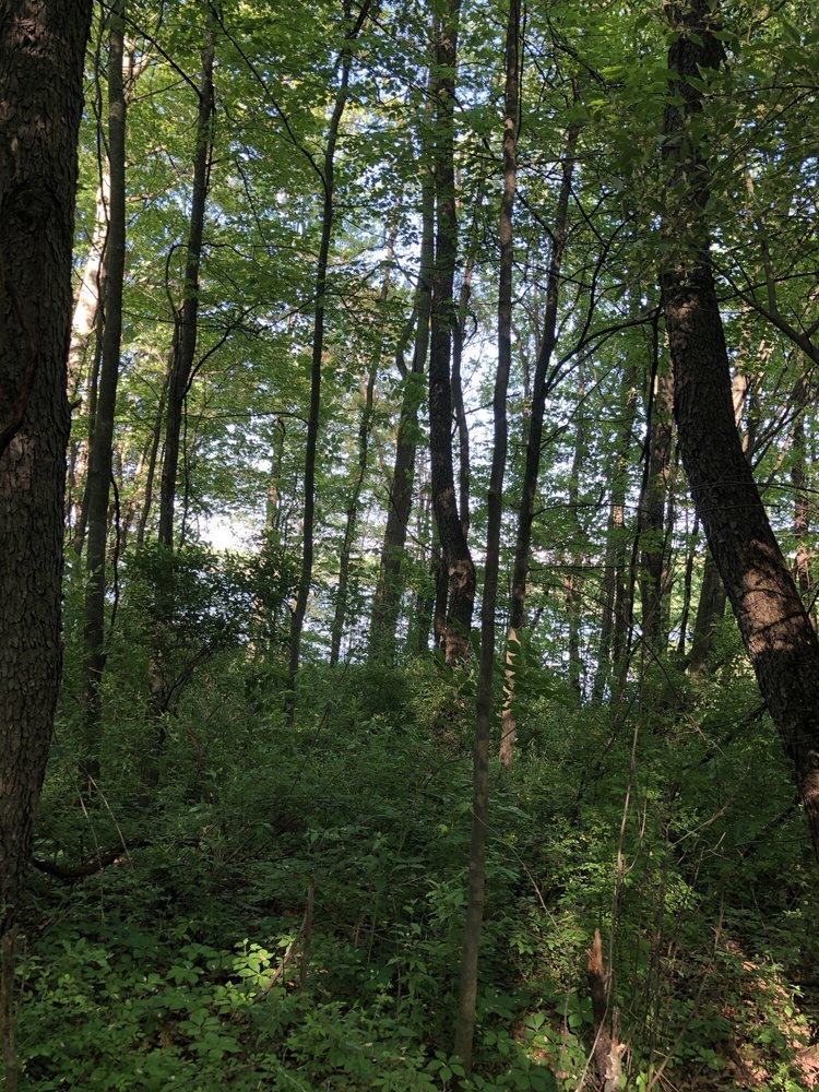 Cold Brook County Park: 14467 E Mn Ave, Climax, MI