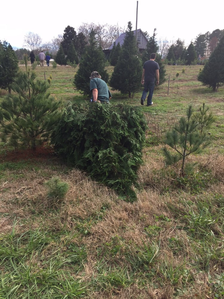 Mill Farm Christmas Trees & Berries: 4900 Fenton Mill Rd, Williamsburg, VA
