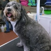 Paw spa 47 photos 20 reviews pet groomers 3501 rd 68 the classy critter solutioingenieria Gallery