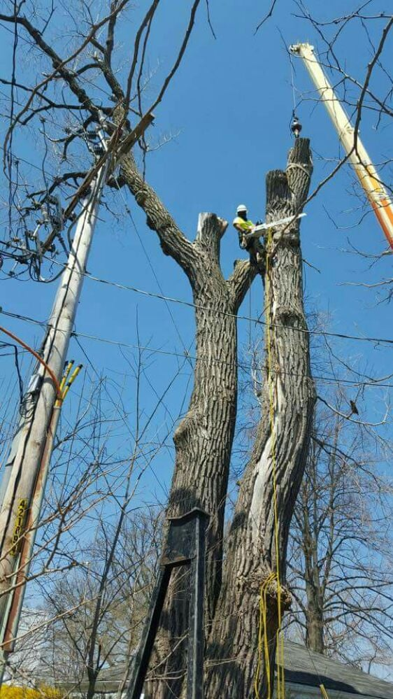 J & S Tree Service: Addison, IL