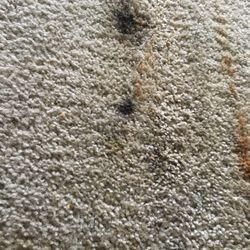 Carpet Spectrum 31 Photos Carpeting 3702 Jackson Ave Gragg. Black Mold ...