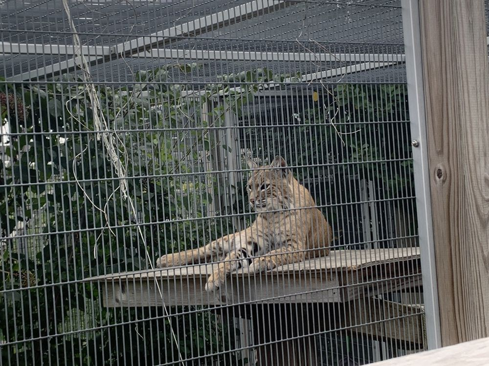 Wildlife Discovery Center: 1401 Middlefork Dr, Lake Forest, IL