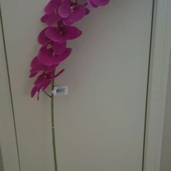 Designer silk gallery florists 11311 harry hines blvd north photo of designer silk gallery dallas tx united states 12 faux orchid mightylinksfo