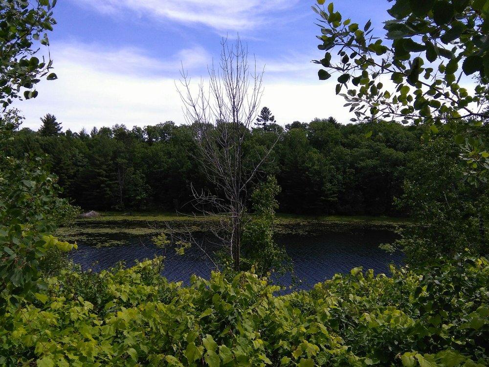 Rifle River Recreation Area: 2550 E Rose City Rd, Lupton, MI