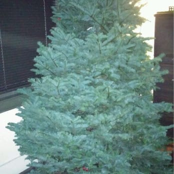 Frosty's Christmas Trees - 34 Photos & 36 Reviews - Christmas ...