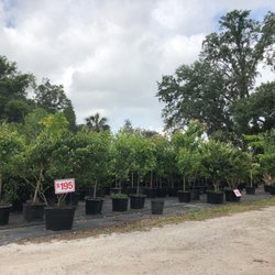 Photo Of Lee S Trees Landscaping Nursery Apopka Fl United States
