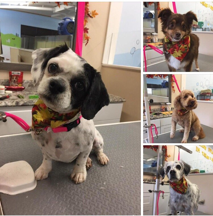 Happy Paws Dog Grooming and Daycare: 5675 Stacy Trl, Stacy, MN