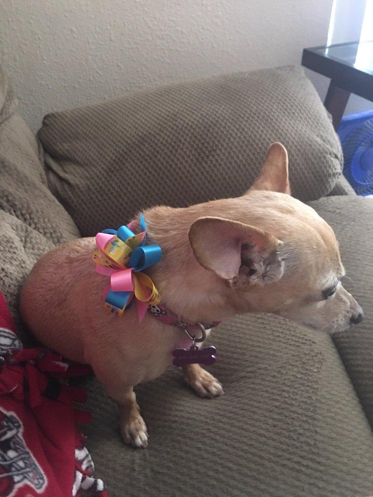 Lakeside Dog Grooming: 11555 Woodside Ave, Santee, CA