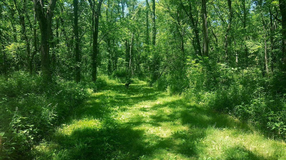 Scott County Park: 18850 270th St, Eldridge, IA