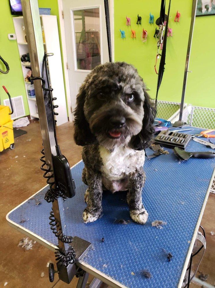 Dog'on Salon: 189 N US Hwy 31, Whiteland, IN