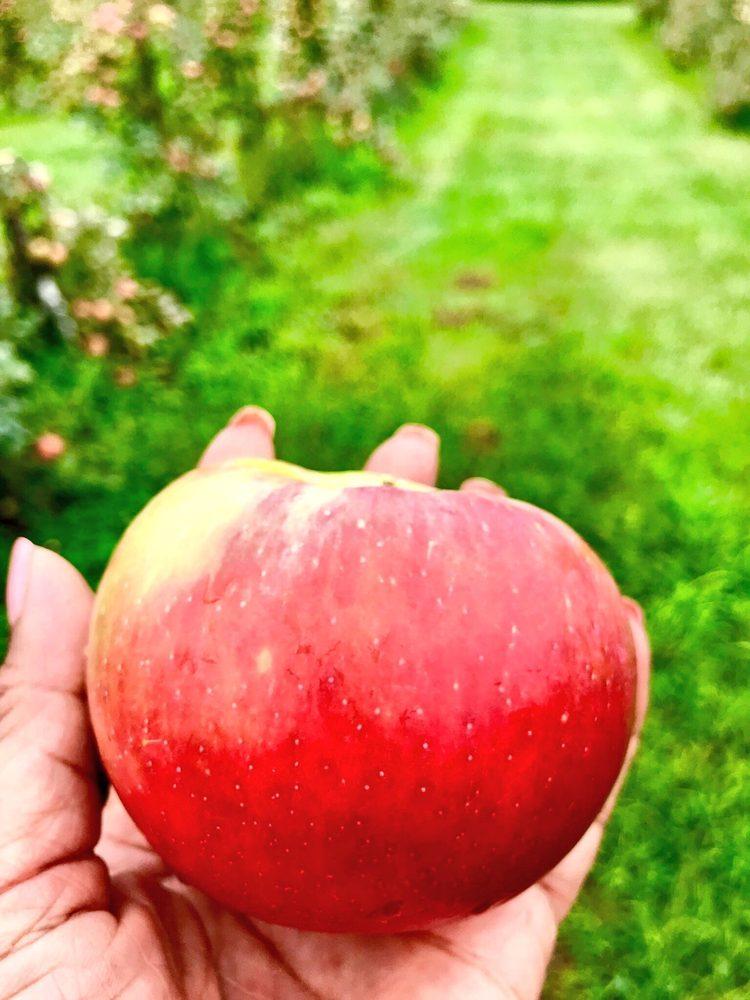 Radke Orchards: 8999 W 200th N, Michigan City, IN