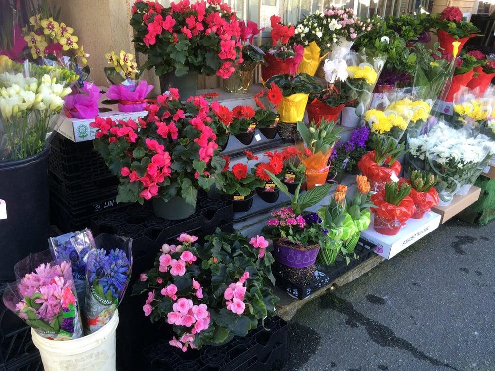 Spring Flowers Yelp