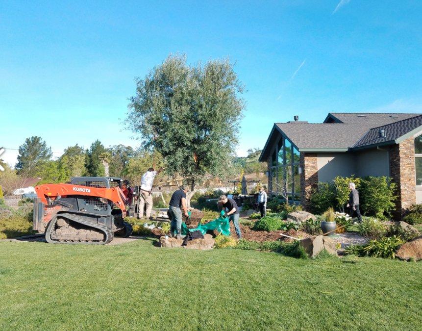 Olive Tree Farm - 12 Photos & 20 Reviews - Nurseries & Gardening ...