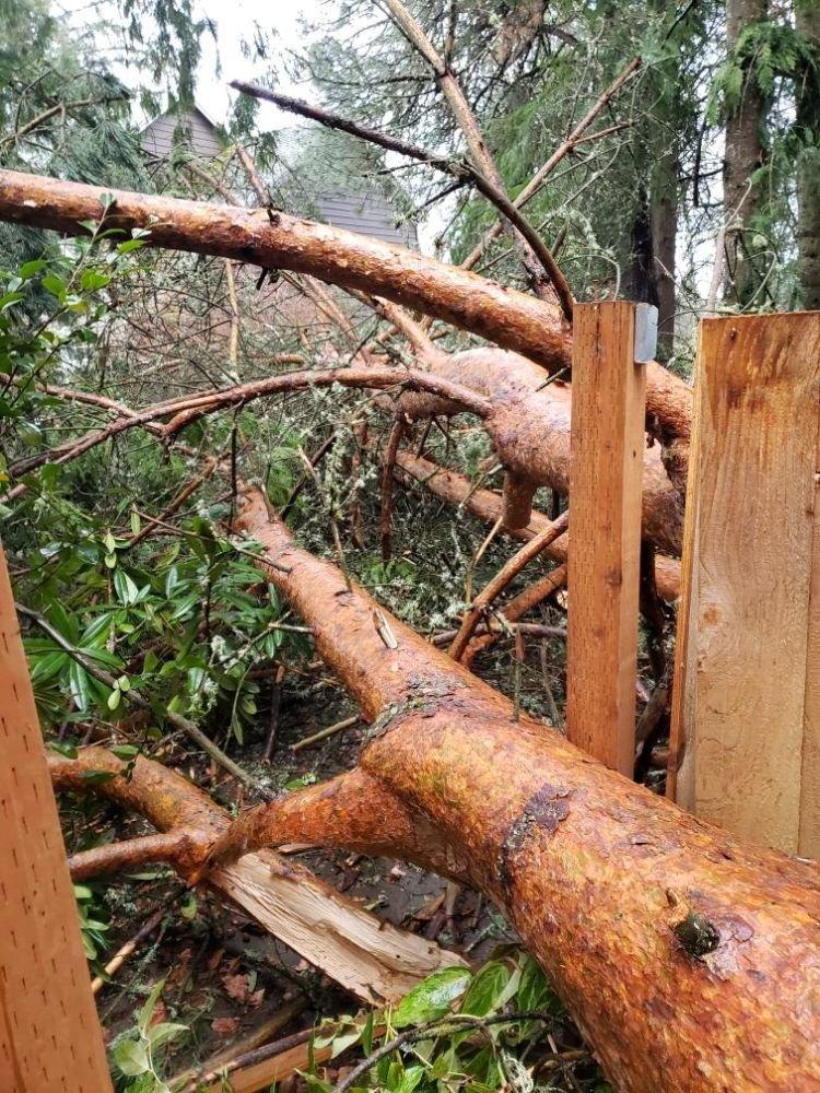 TreeTime Tree Service: Portland, OR