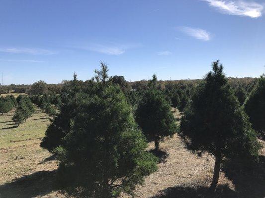 Elgin Christmas Tree Farm.Elgin Christmas Tree Farm 120 Natures Way Elgin Tx