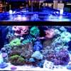 Aquarium Artisans: 8005 Plainfield Rd, Cincinnati, OH