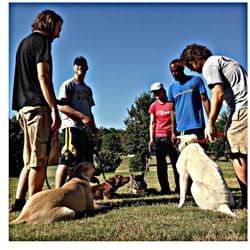 Aggressive Dog Training Madison Wi