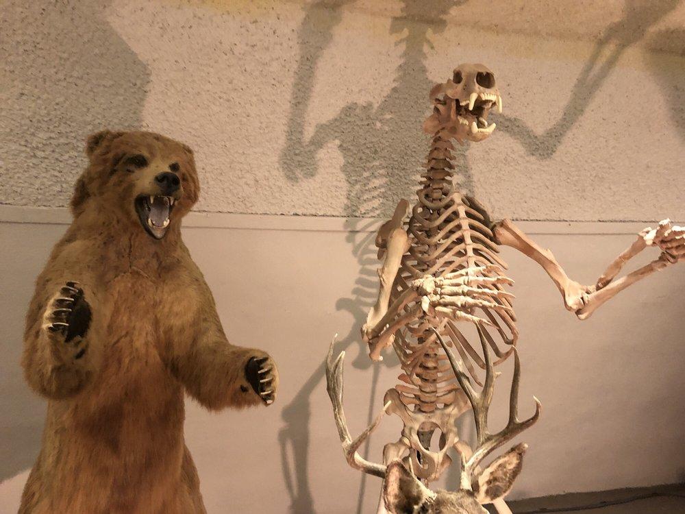 Sternberg Museum of Natural History: 3000 Sternberg Dr, Hays, KS