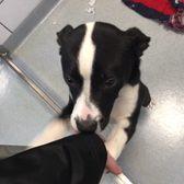 SPCA Serving Erie County - 25 Photos & 15 Reviews - Animal