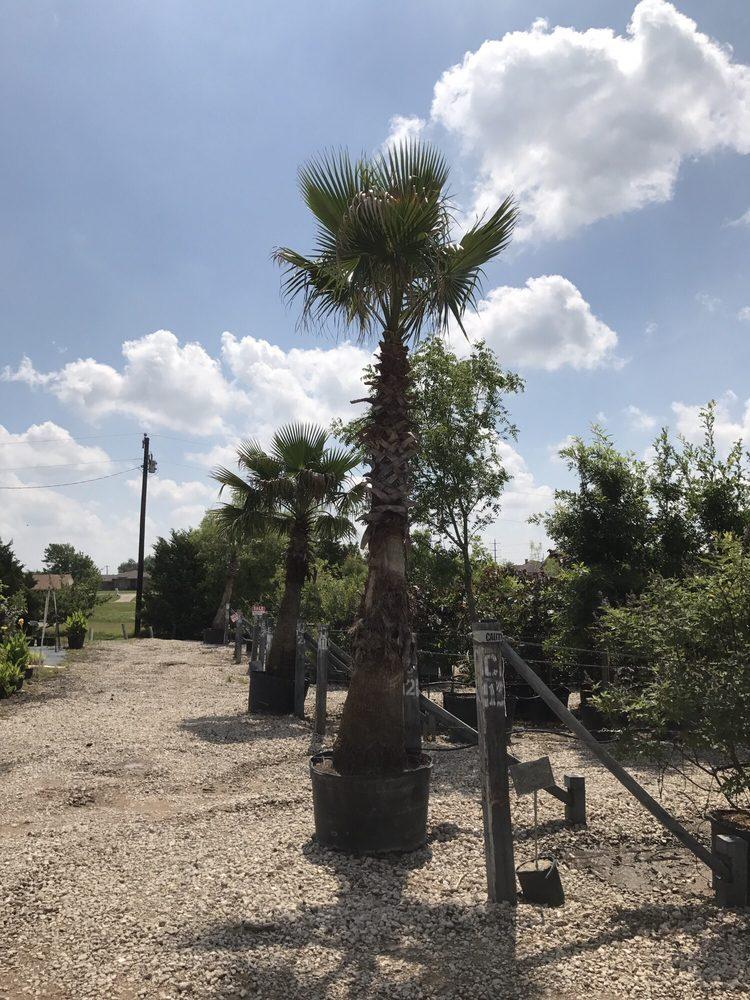Landscape Source Nursery: 167 Ole W Ln, Rockwall, TX