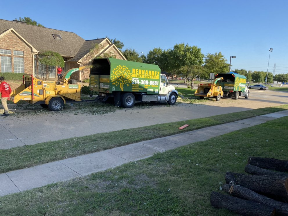 Hernandez Tree Experts: Plano, TX