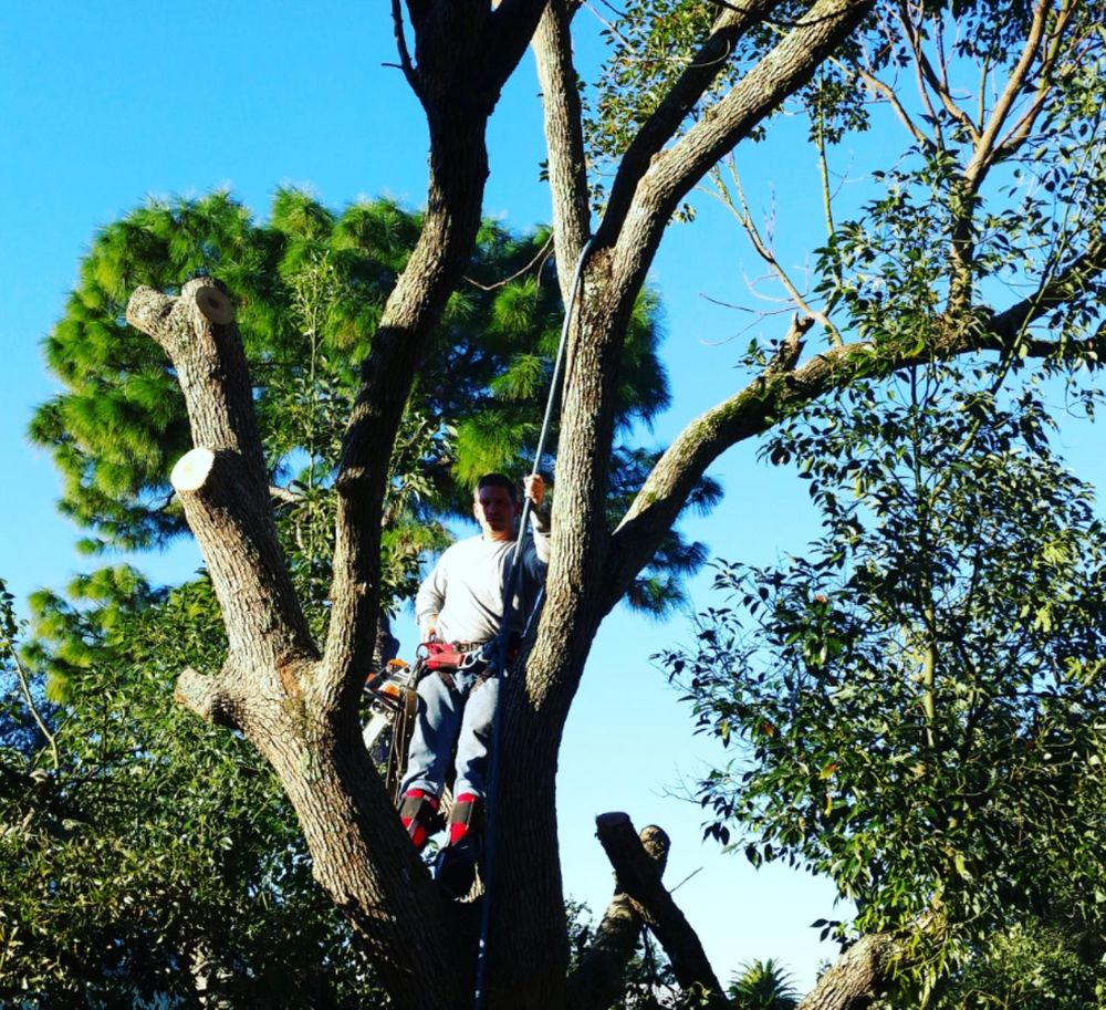 Big Deals Tree Service: Eagle Lake, FL