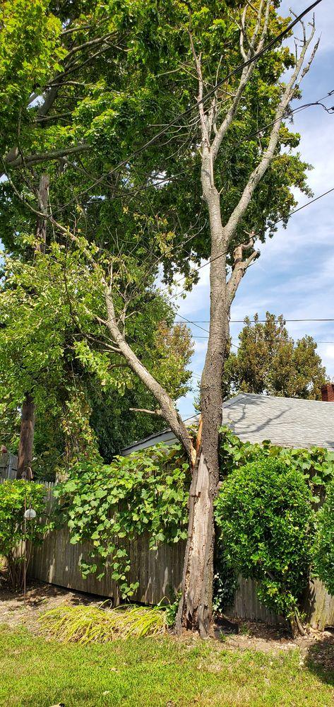 K & A Tree Service: 2141 Babylon Turnpike, Merrick, NY