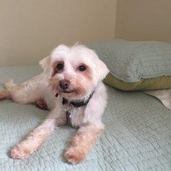 Pixie Mamas Rescue Pet Adoption Downtown Buffalo Ny Yelp