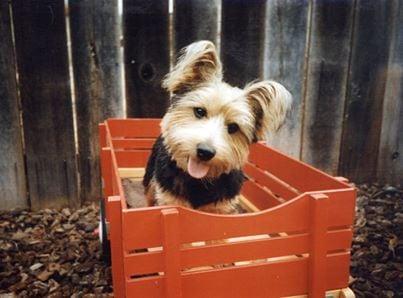Dog Grooming Napa Ca