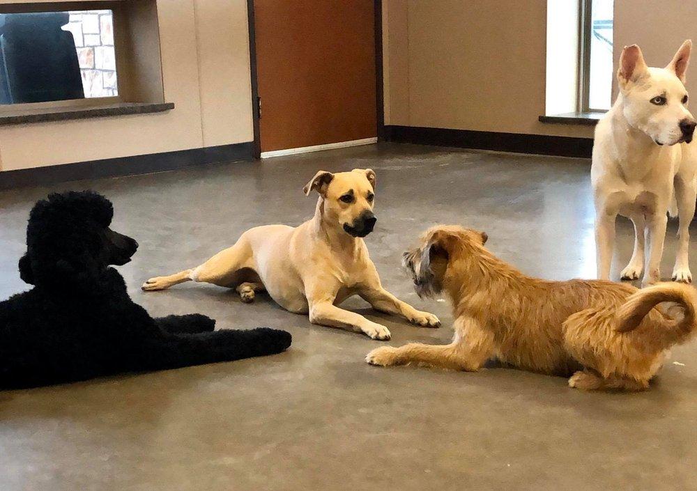 Simply Posh Pets: 7516 Kathy Ln, Benbrook, TX