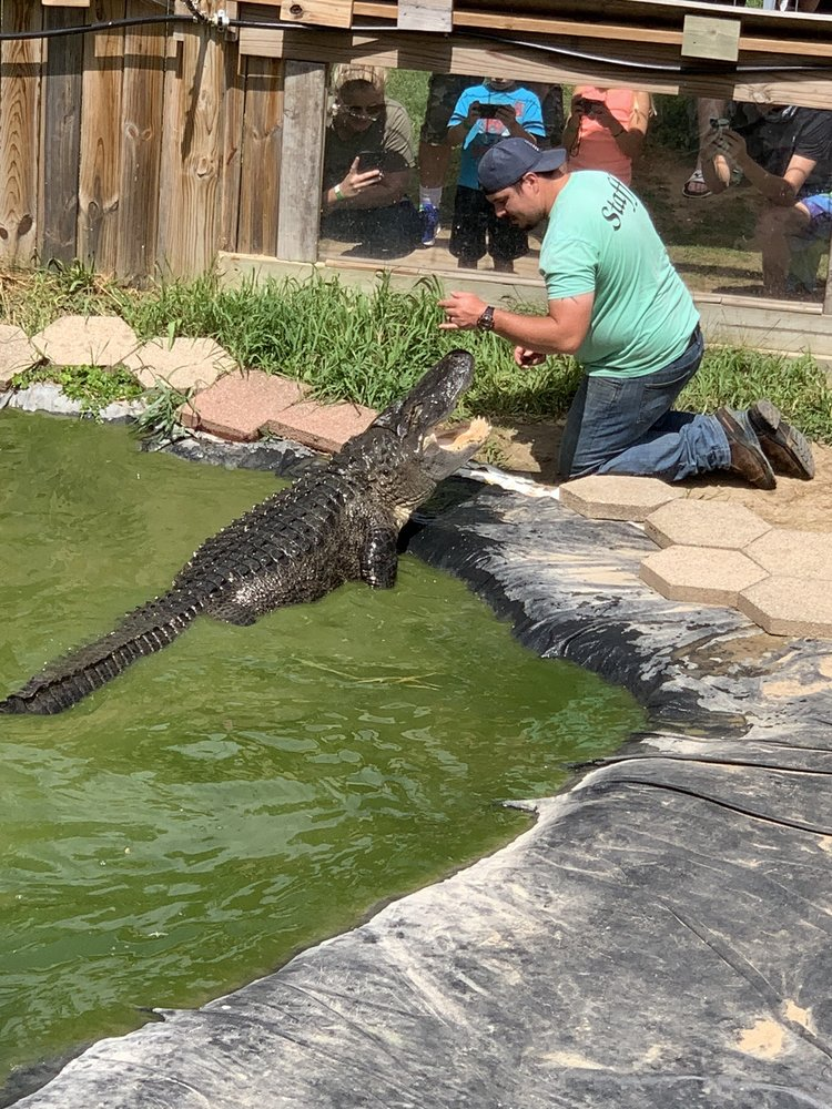 Critchlow Alligator Sanctuary: 1698 M-66, Athens, MI