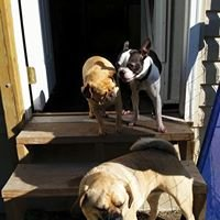 Clippin House Pet Grooming and Boarding: 20443 Tall Timber Rd, Staunton, IL