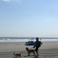 Photo Of Wildwood Dog Beach Nj United States Area The