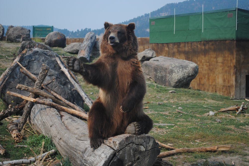 Social Spots from Montana Grizzly Encounter