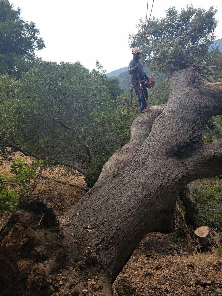 Encinal Tree Service: Redwood City, CA