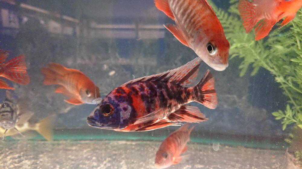 Concord Aquarium