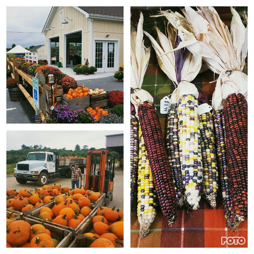 Orrs Farm Market: 682 Orr Dr, Martinsburg, WV