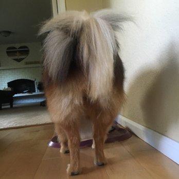 Petsmart Lynnwood Dog Training