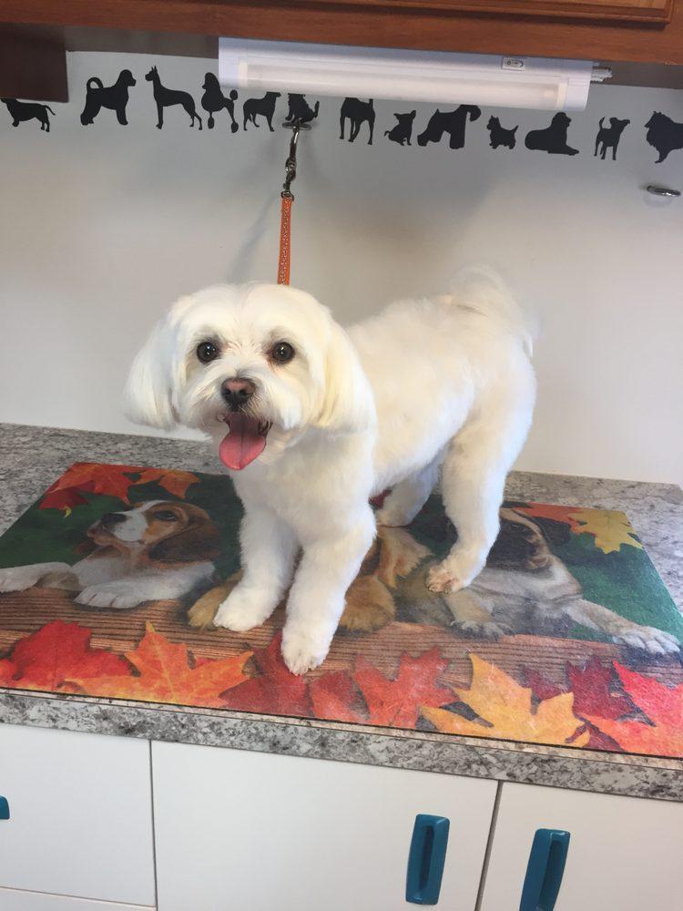 Briarwood Pet Grooming: Riverton, UT