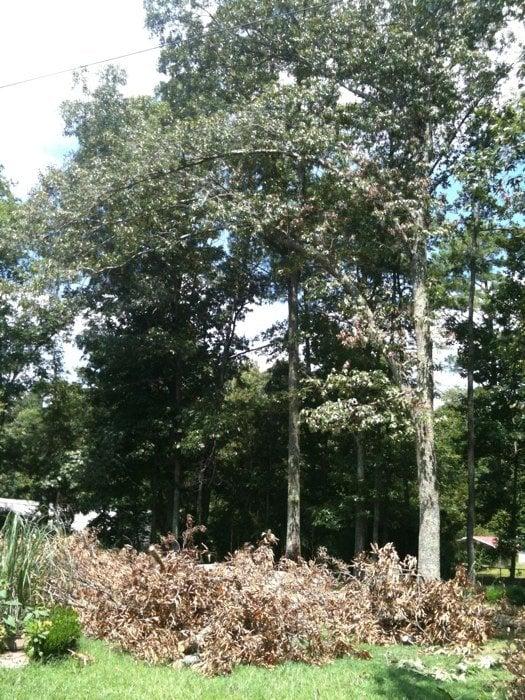 Homan Tree Service: 3607 Fox Run, Jasper, AL