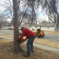 Image result for Tree removal Lincoln NE