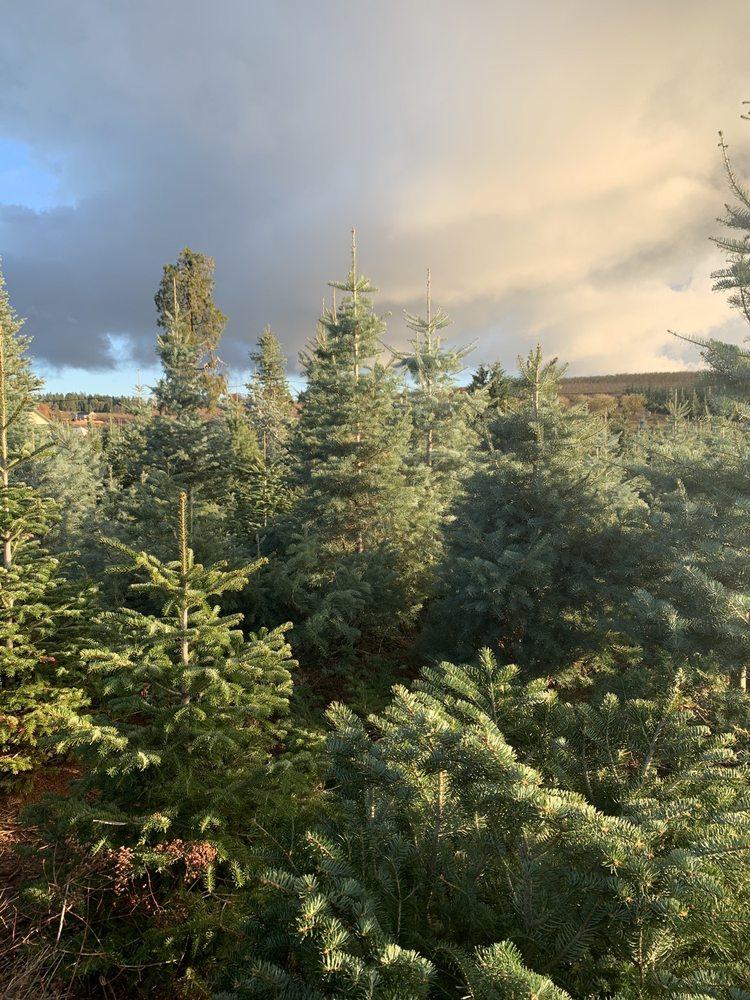 Hillside Tree Farm: 2881 N Canyon Rd, Camino, CA