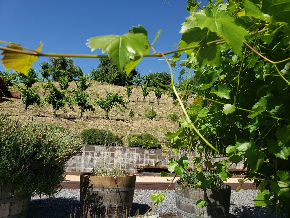 Pedroncelli Winery: 1220 Canyon Rd, Geyserville, CA
