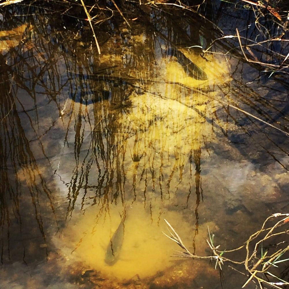 Alligator Creek Preserve